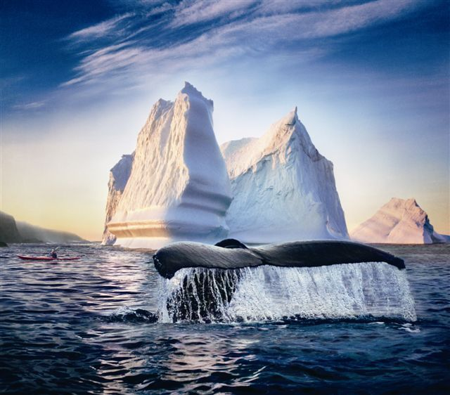 one of the best places to see nature, with dramatic coastlines, sweeping barrens, thick boreal forests, ancient rock formations, it is teaming with seabird colonies and rich marine life