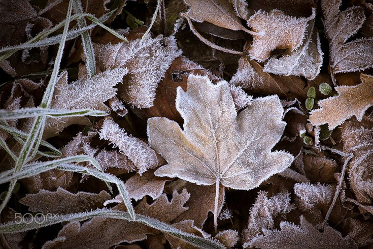 First Frost by Sarah Brooks on 500px
