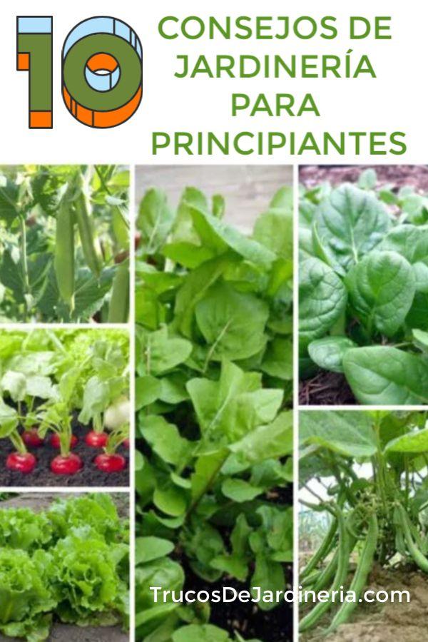 10 Consejos De Jardinería Para Vegetales Que Necesitas Saber Ahora Mismo!