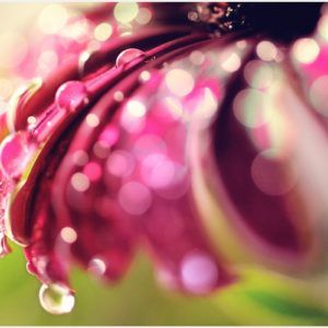 Water Drops On Flower Background Wallpaper | water drops on flower background wallpaper 1080p, water drops on flower background wallpaper desktop, water drops on flower background wallpaper hd, water drops on flower background wallpaper iphone