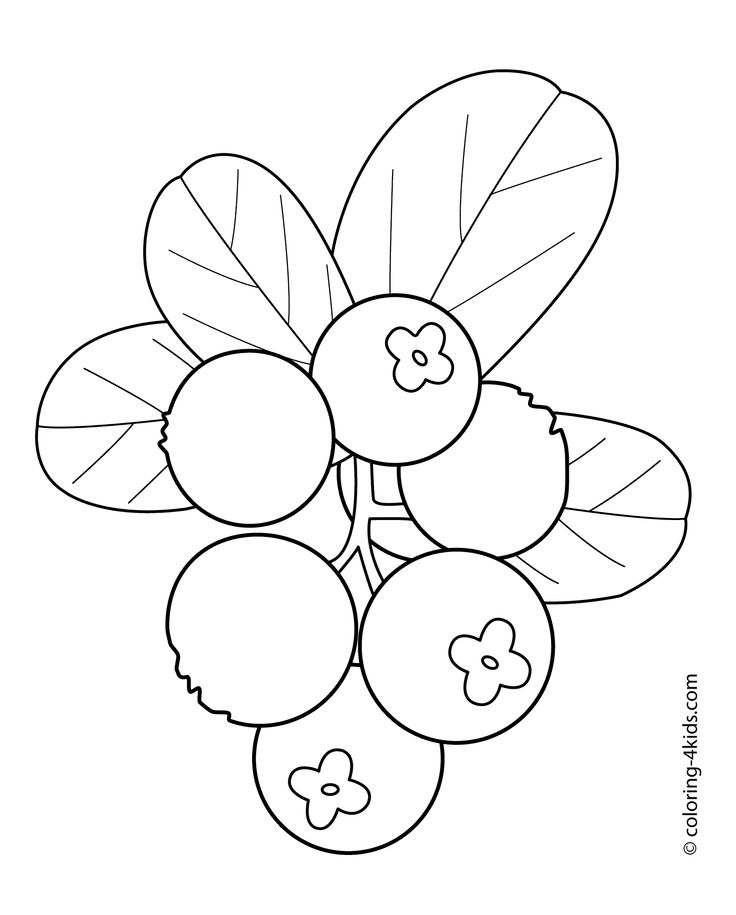 Cowberry fruits and berries coloring pages for kids