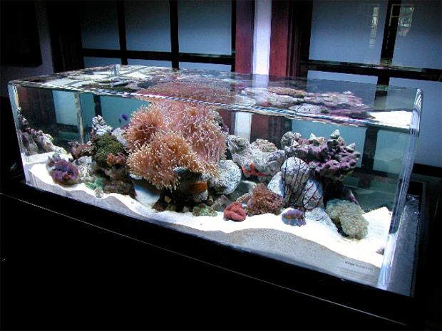 Zero Edge creates unique, custom aquariums that go far beyond the glass rectangle you grew up with. Their rimless design allows water to overflow the tank and circulate back through a perimeter drain creating a crystal clear cascade for you and your fish to enjoy.