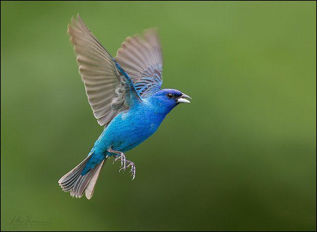 красивые птицы фото (6)
