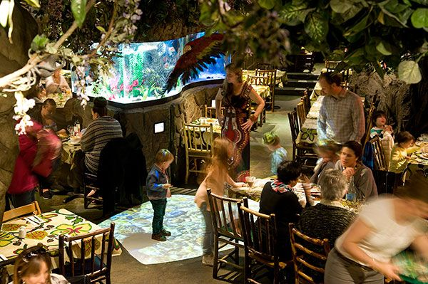 The Rainforest Cafe - Welcome to The Rainforest Cafe