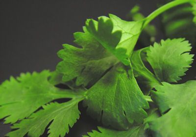 The Herb Gardener: How to Keep Herbs from Bolting