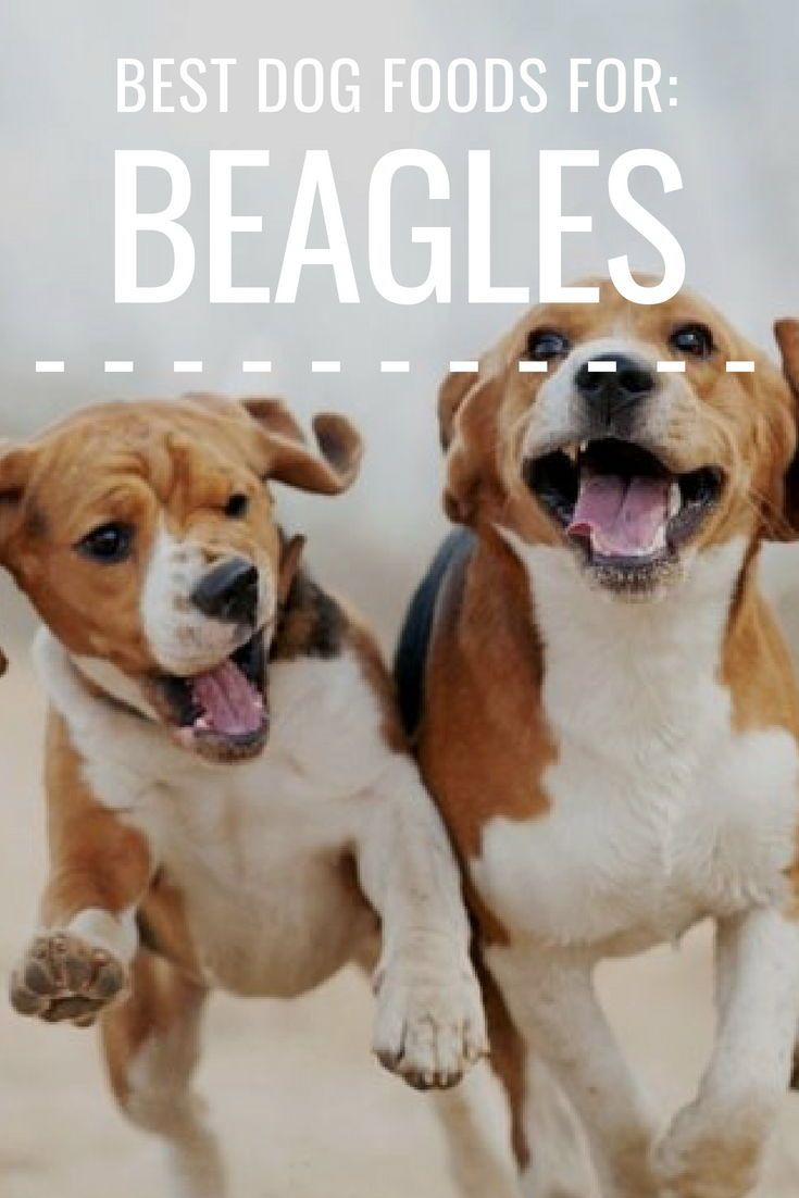 6 Best Dog Foods For Beagles 2020 Top Eats For Snoopy Dogs