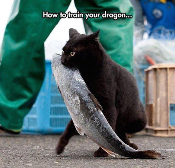 お魚くわえたドラ猫が激写される | ロケットニュース24