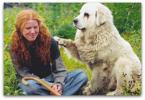 Livestock Guardian Dogs at Work