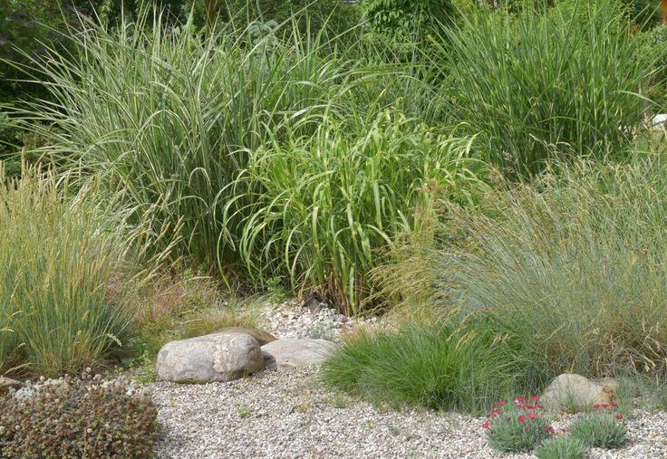 Skupina okrasných trav