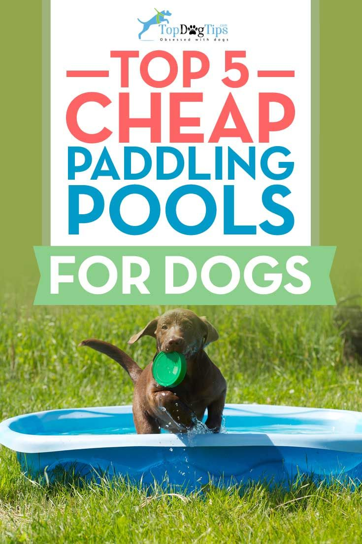Best Cheap Dog Paddling Pool for Hot Summer Days. The hot summer months can be brutal for dogs. Dogs have thick fur coats, and they can't sweat like we do. Cooling down in the best cheap dog paddling pool can really help your pooch when the temperatures heat up. #dogs #dogpools #paddlingpool #swimming #pets