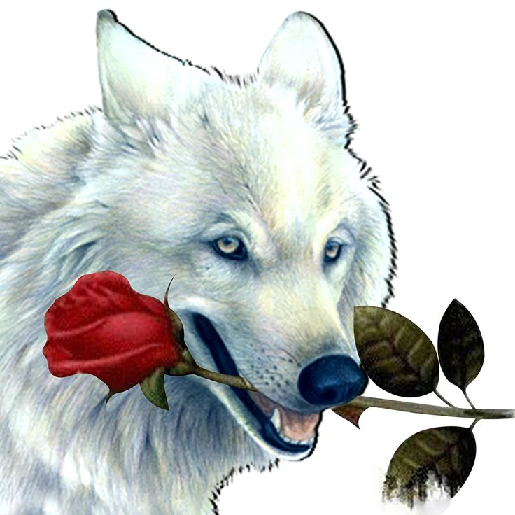 25x25 cm Crafts Diamond Embroidery White Wolf Diy  Diamond Painting Kit  for Round  Drill Rhinestone Wall Hanging Decoration