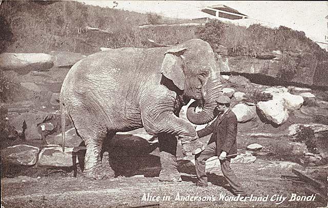 Alice the Elephany in Anderson's Wonderland City Bondi/Tamarama