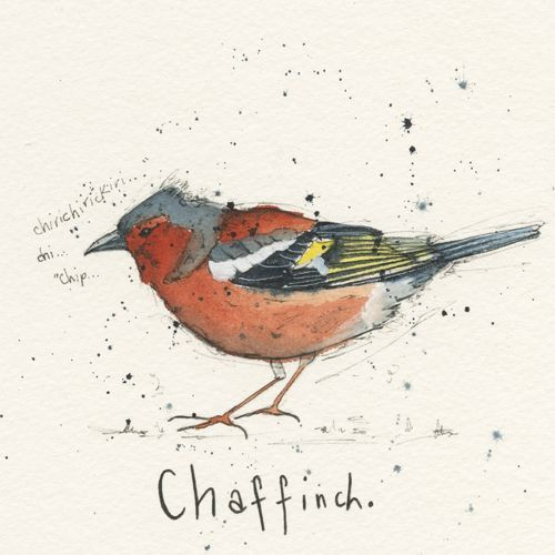 ltd ed garden bird print - chaffinch via Michelle Campbell Art. Click on the image to see more!