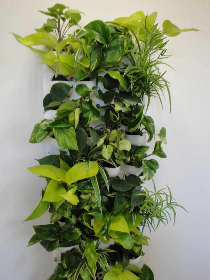 66 best murs v g taux images on pinterest plant wall veggies and plants. Black Bedroom Furniture Sets. Home Design Ideas