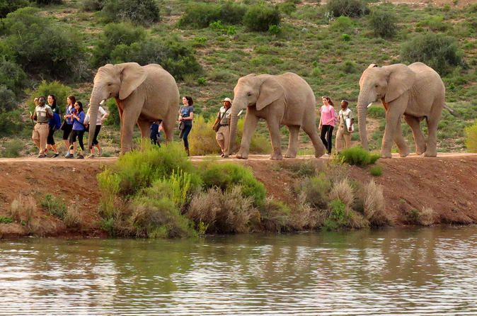 2-Day South African Wildlife Safari Guided Tour from Cape Town Get close to South Africa's wildlife with this overnight safari adventure trip from Cape Town. Drive along the scenic Route 62 to the town of Oudtshoorn in the Klein Karoo and try to spot most of Africa's famous Big Five game animals on a 4x4 game drive at a Western Cape private game reserve. Meet some wildlife at an ostrich farm, an African elephant reserve and Cango Wildlife Ranch – home to some of the world's mo...