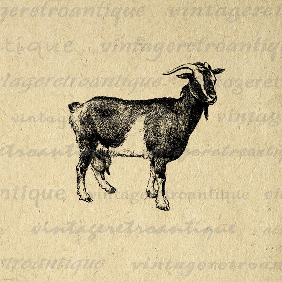 Digital Image Antique Goat Graphic Illustration Download Printable Vintage Clip Art. High resolution digital graphic. This vintage printable digital image is great for transfers, printing, t-shirts, and other great uses. For personal or commercial use. This image is high quality, large at 8½ x 11 inches. Transparent background version included with every digital image.