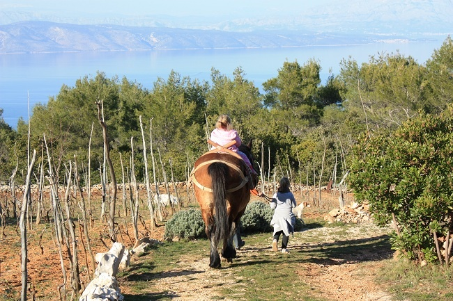 Horse riding in Humac on Hvar, Croatia