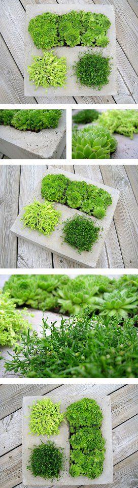 für Mehrfachbepflanzung - cool ///  multi-planter //// concrete container gardens