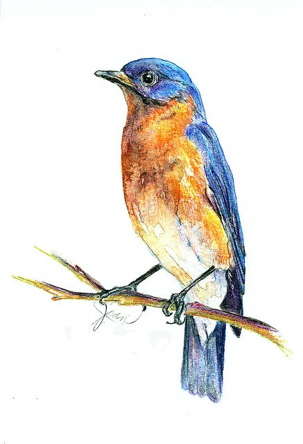 A Bluebird Sketch With Watercolor Pencils From Back When