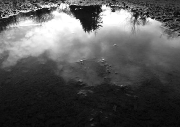 A picture of a puddle that reflects the overcast sky and various trees.