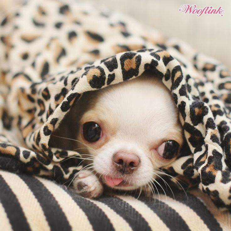 WHAT TO DO... ON A CHILLY DAY....