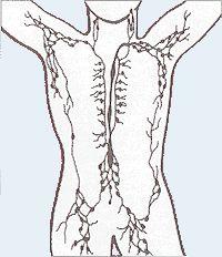 Sistema linfático – Wikipédia, a enciclopédia livre