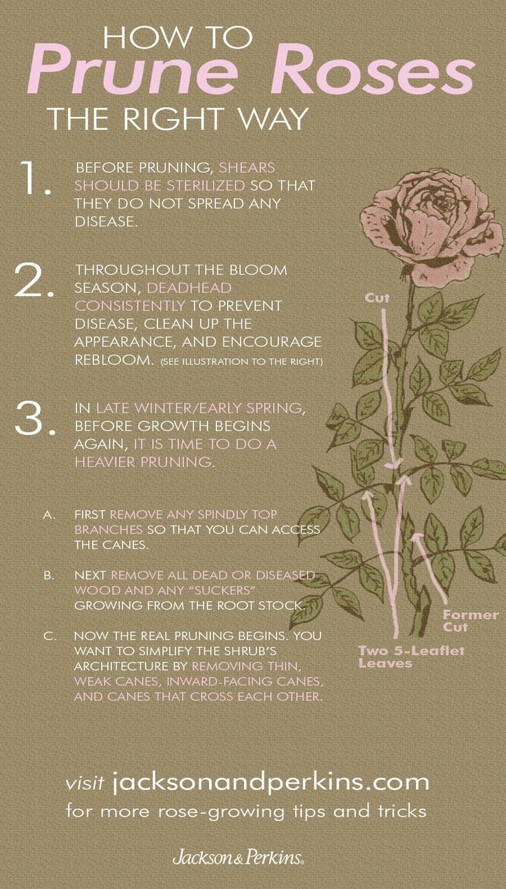 Jp Gardening Tips 1000 In 2020 Rose Care Pruning Roses Planting Flowers