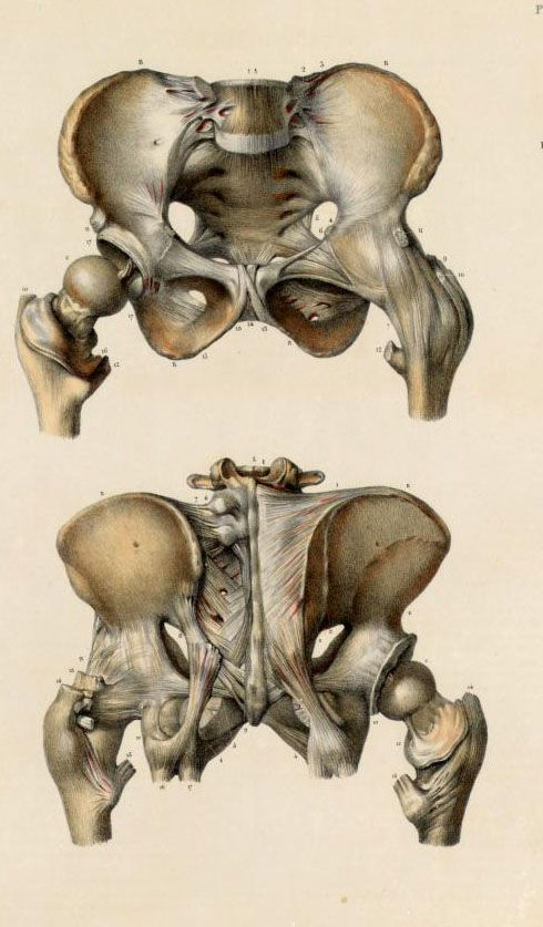 9 best images about ribcage on Pinterest | Ribs, Stains and Shape