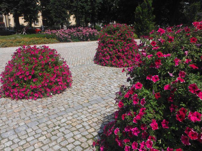 terra flower power - puławy
