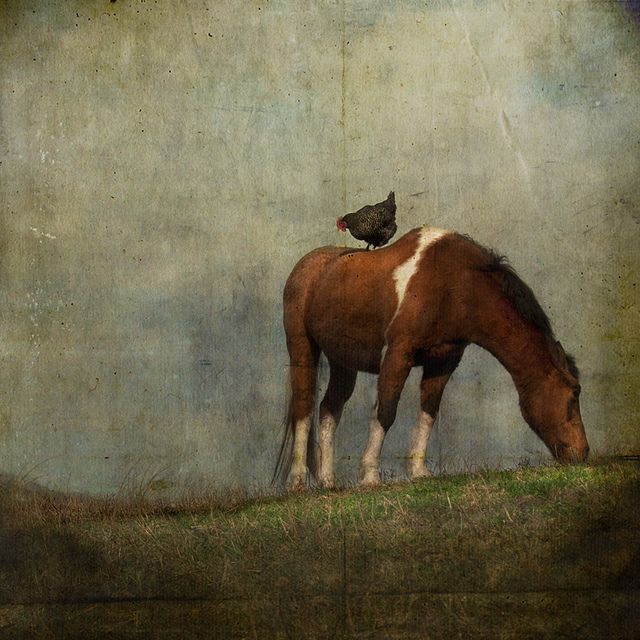 A Little to the Left and Up a Bit by jamie heiden, via Flickr