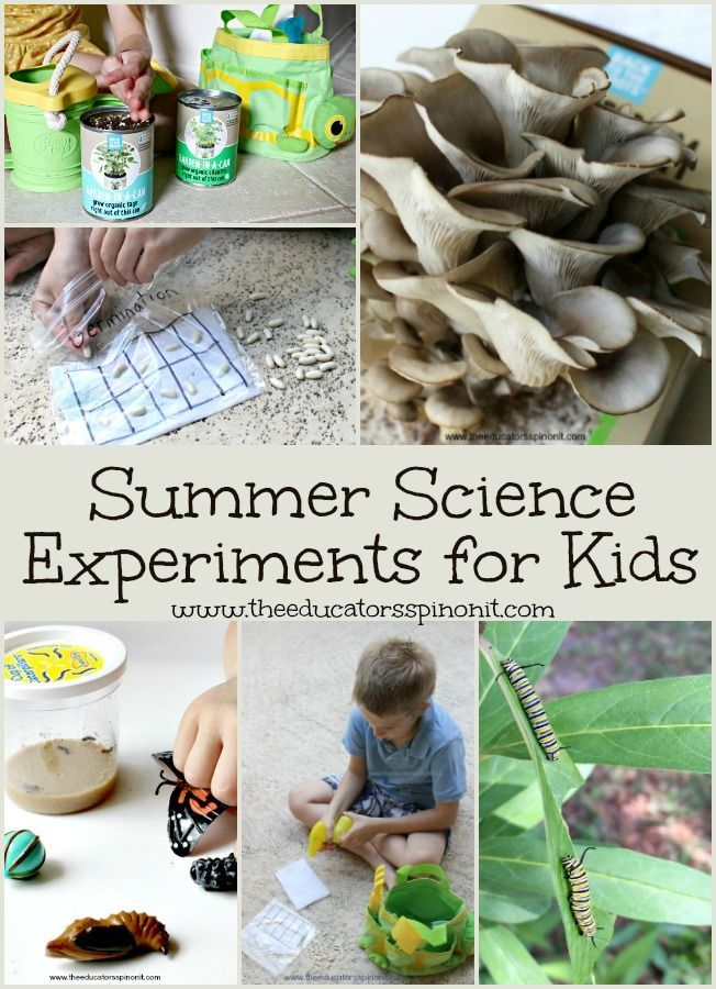 Best Summer Science Experiments for Kids: From raising butterflies to growing mushrooms and everything in between. These are the top kid selected science projects to make and do over summer break.