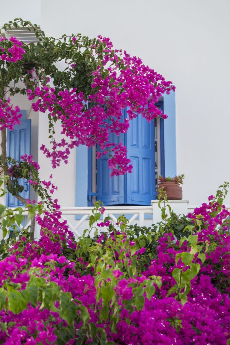 Windows & flowers, Oia, Santorini  <3