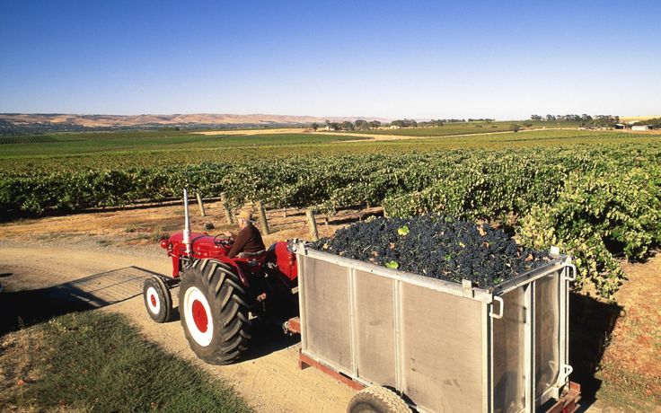 #09 South Australia's wineries (SA) Easily accessible from Adelaide, the Barossa…
