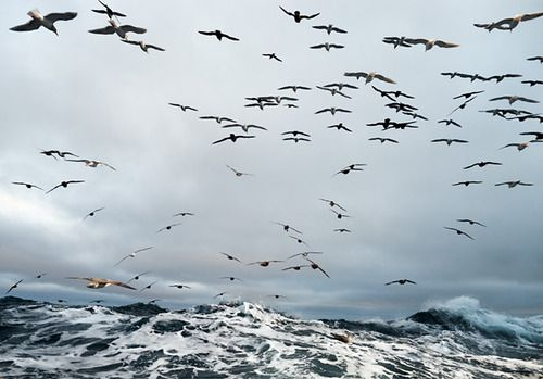 """""""The Scavengers"""" by Corey Arnold, 2010 