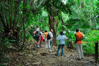 Self-Guided Nature Walk at Cockscomb Basin Wildlife Sanctuary and Jaguar Preserve, Belize National Parks