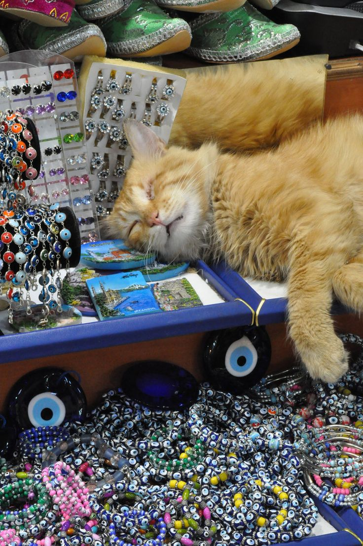 One well-protected napping cat - amidst evil eye baubles, bangles, & Turkish shoes in the Grand Turkish Bazaar in Istanbul.