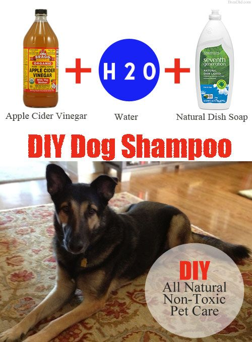 Concerned about non-toxic products for your family? Don't forget the family pet. All natural DIY dog shampoo recipe. Only $0.44 a wash! BrenDid.com