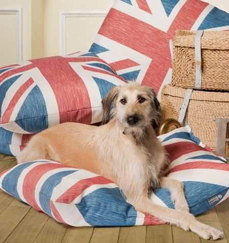 Check out this wonderful doggie duvet direct from the UK!  It will certainly add a touch of  style to any home! www.ukuscadoggie.com