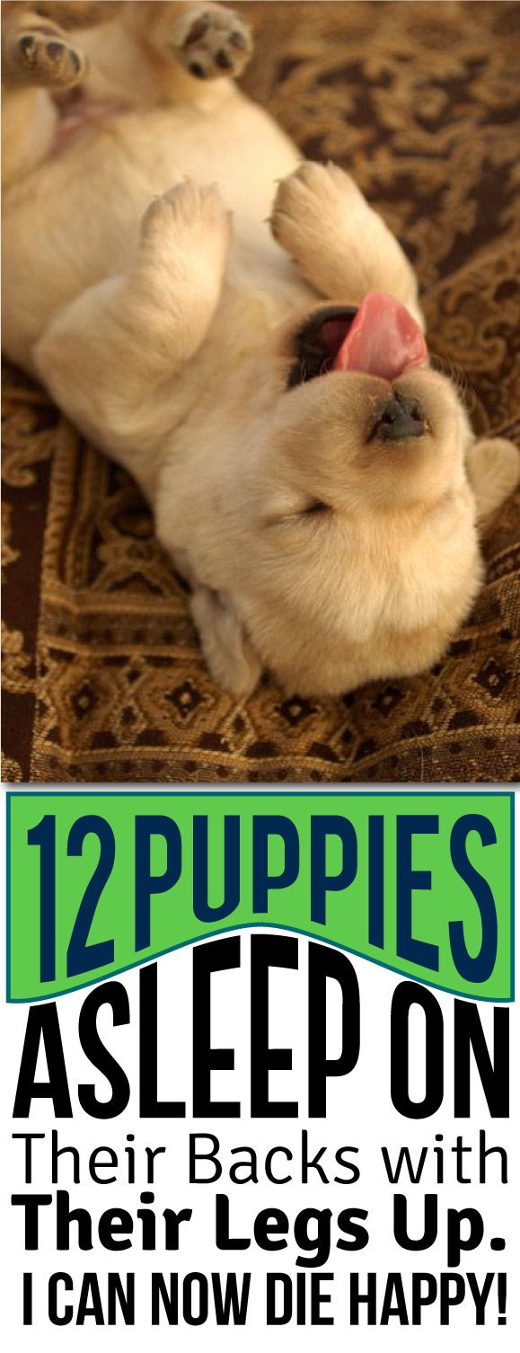 best holy cuteness images on pinterest baby puppies doggies