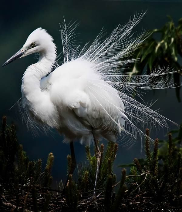 The 293 Best Egret Medicine Egret Teaches To Stand In The Physical