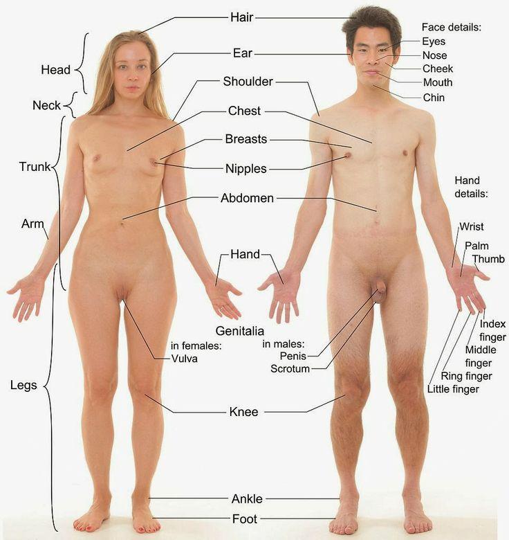 Nude Human Anatomy