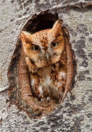 An owl from Prescott-Russell, Ontario, Canada