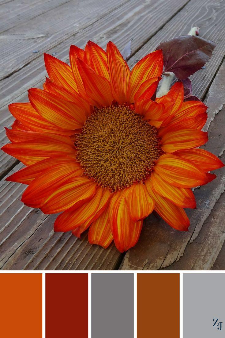 ZJ Colour Palette 171 #colourpalette #colourinspiration