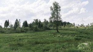 Torfböden: Bewirtschaftung auf Kosten von Steuerzahlern und Natur (Artikel enthält Video …   – Anbau Kosten