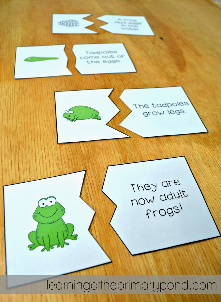 Frog life cycle puzzles - image from a blog post about teaching the butterfly, frog, chicken, and plant life cycles! Lots of ideas and links to online games and videos.