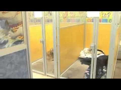 Dog Training Henrietta Ny