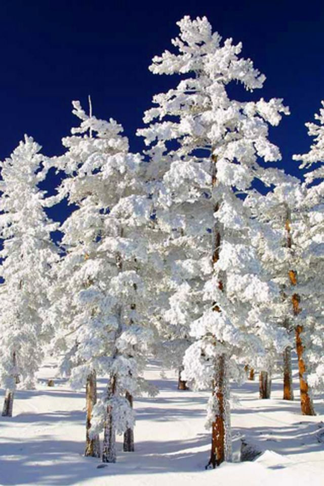 I'm dreaming of another white Xmas... One day.