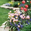 Bulbs look great by themselves, but breathtaking in colorful combinations. Because choosing combos that bloom together can be a challenge, start with the prepackaged bulbs in catalogs or at your local garden center.