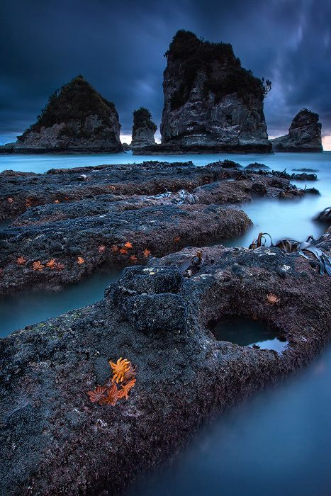 West Coast, South Island, New Zealand | Nature II ...