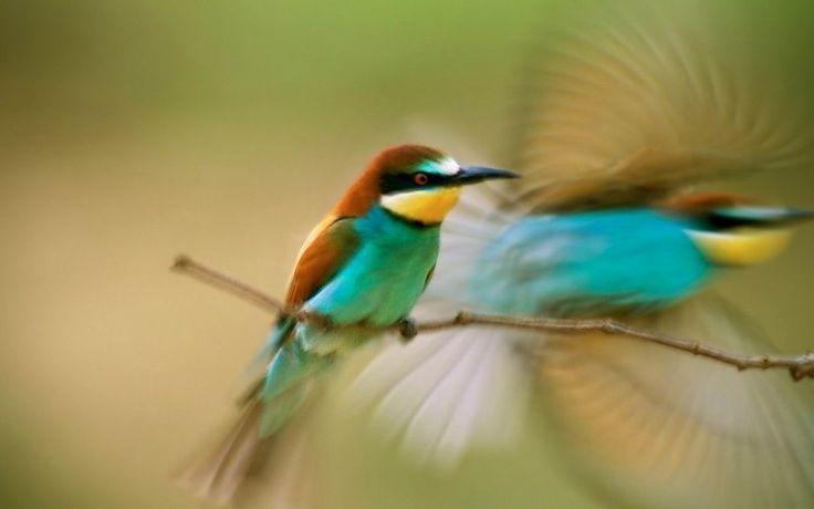 naturaleza animal ave nacional reflexión del agua geográfica HD fondos de pantalla verde